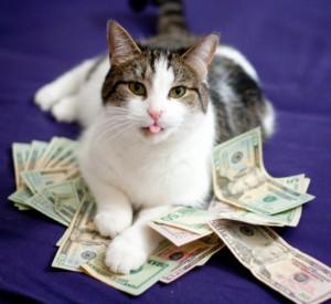 chat-riche