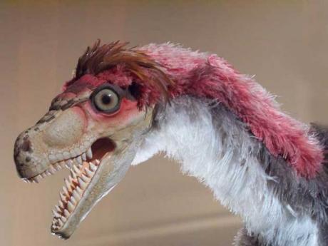 velociraptor_plume